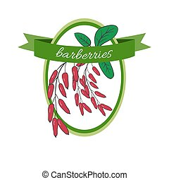 Handdrawn vector illustration barberries Medicinal berryFor...