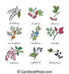 Medicinal berry collection. Bird cherry, blackthorn,...
