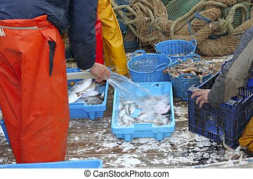fishermen hands working fish catch on boat deck