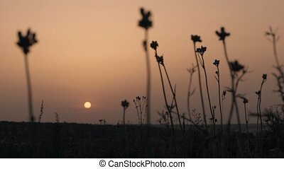 field with ears on sunset background