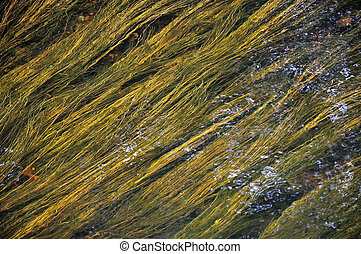 Green and yellow algae under watter - Taken in some irish...