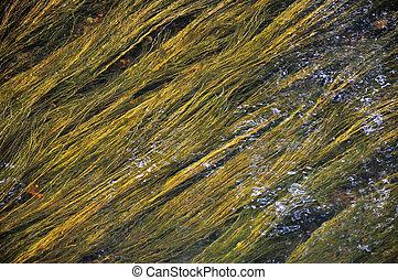 debajo, verde, algas, amarillo,  Watter