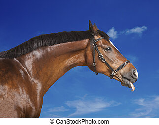Horse blue sky - a brown horse sticks his tongue out of the...