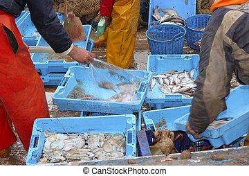 pescadores, Manos, trabajando, pez, coger, barco, cubierta