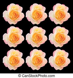 Set of realistic light pink mix yellow rose