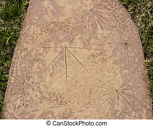 Foliage patterns on a cement floor, both large and small...