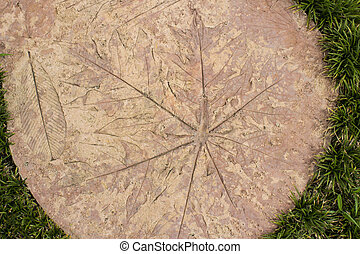 Foliage patterns on the cement and grass.