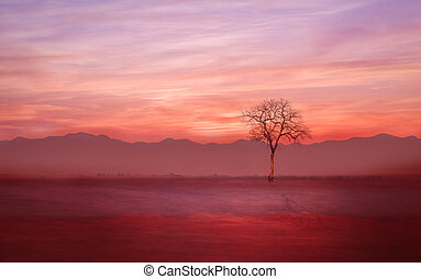 Lonely tree on the ground with evening mist