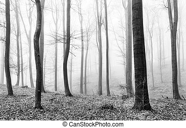 Forest mist in BW