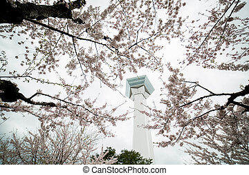 Goryokaku Park view is star of building for protect city...