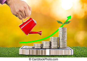 Can pouring with growing money plant for save your budget.