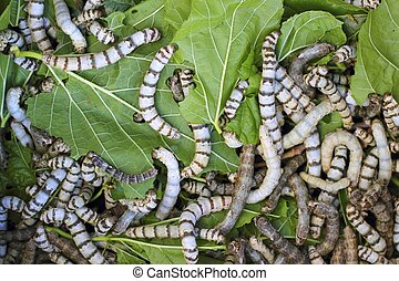 many silkworms texture eating mulberry leaves pattern