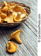 Mushroom Yellow chanterelle - Fresh chanterelle mushrooms on...