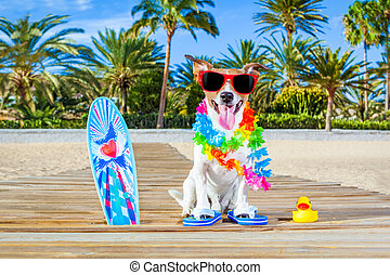 summer vacation paradise dog - jack russell dog at the beach...