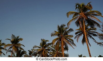 Palm trees. Blue sky