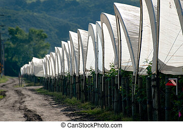 Row of Tents - A row of plastic covered bow house tents for...