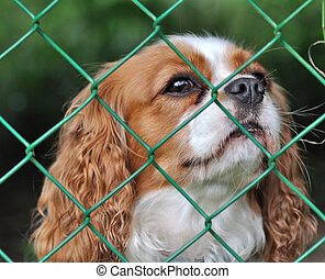 dog behind a fence - cute dog behind a fence with a wistful...