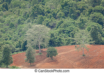 Dry forest with reclaim land - Aerial view on dried green...