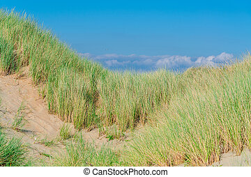Seagrass, beach and sand dunes - Landscape with beach...