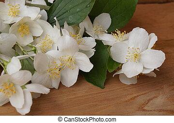 Medicinal plants - jasmine (Jasminus communis)