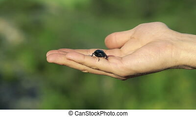 Black beetle crawling on hands