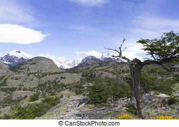 Springtime in Los Glaciares National Park, Argentina -...