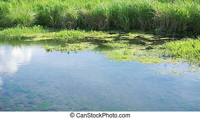 Flowing river and green reeds in full HD