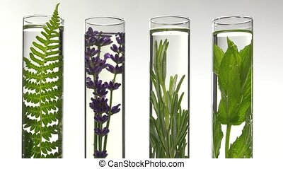 fern lavender, rosemary and mint in - Adding drops of water...