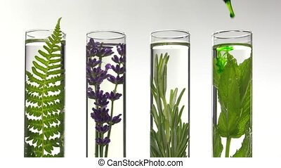 fern,lavender, rosemary and mint - Adding green liquid drops...