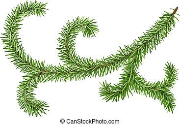 Decoration fir branch