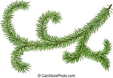 Decoration fir branch