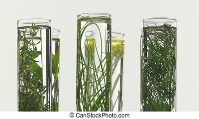chives, dill, thyme, basil, curry - Closeup of test tubes on...