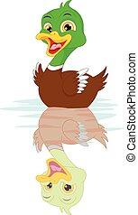 pato, caricatura, natación