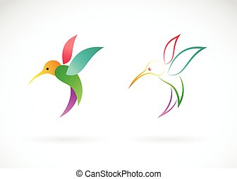 Vector image of an hummingbird design on white background,...