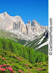 Torri del Vajolet in Dolomites at the foreground of blooming...