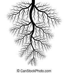 vector of roots