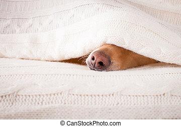 dog sick , ill or sleeping - jack russell dog sleeping under...