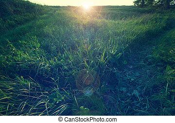 Grassland - Green grassland in the Spring