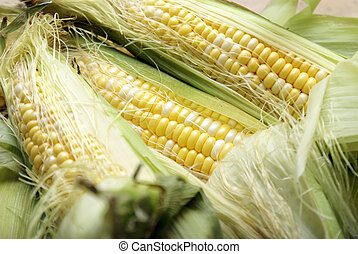 Corn on the Cobb - A macro of a few cobs of corn.