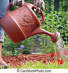 Gardener Waters Flowers - A gardener waters the flowers in...