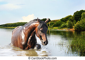 horse out of the water