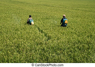 Workers spraying pesticide - Agricultural workers spraying...