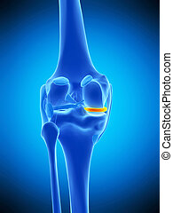 the medial meniscus - medically accurate illustration of the...