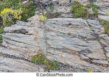Part of rock close up - Part of rock close up with yellow...
