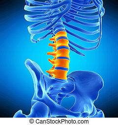 the lumbar spine - medically accurate illustration of the...