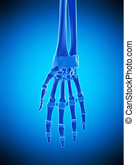 the hand ligaments - medically accurate illustration of the...