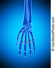 the metacarpal ligaments - medically accurate illustration...