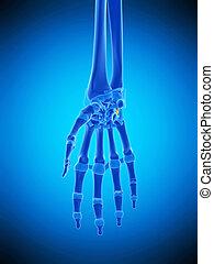 the pisohamatel ligament - medically accurate illustration...