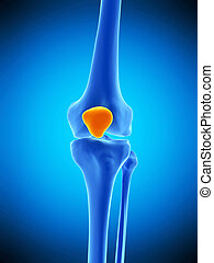 the patella - medically accurate illustration of the patella