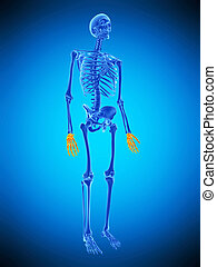 the skeletal hands - medically accurate illustration of the...